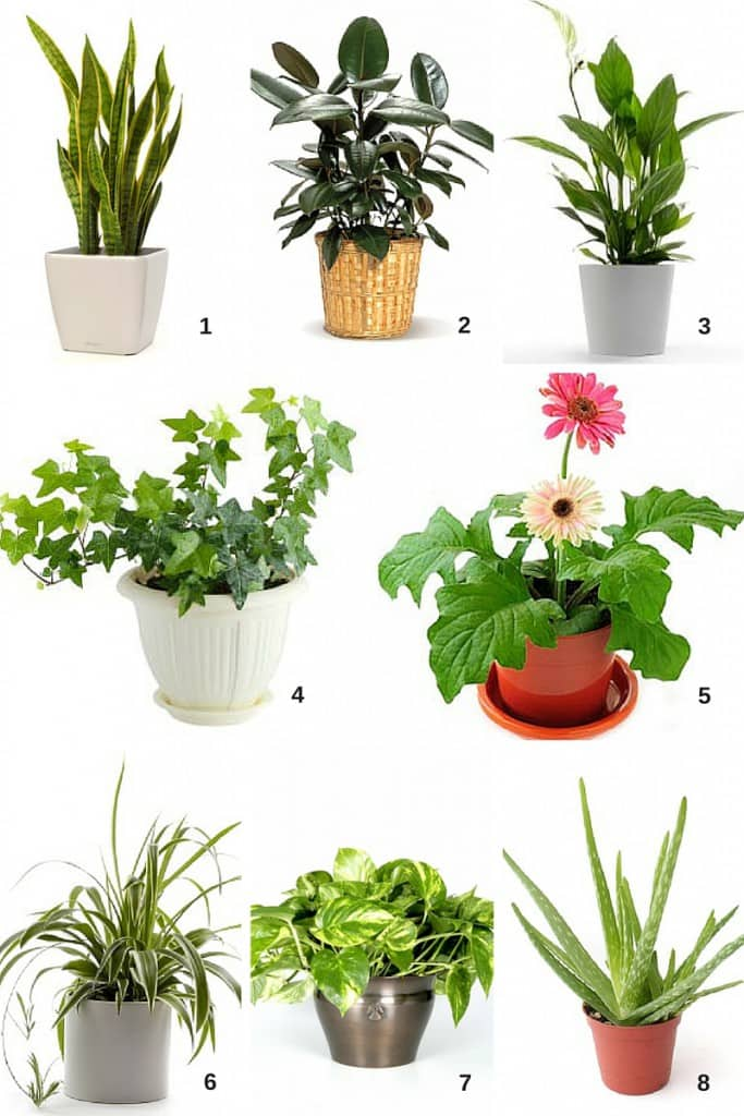 Air Filtering House Plants Small Es