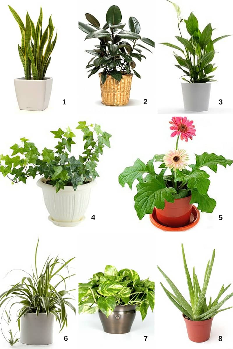 Spring Cleaning: Air-Filtering Houseplants