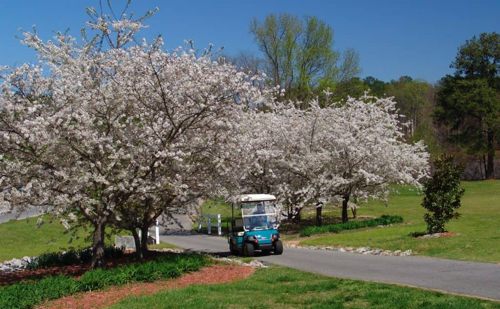 person riding a golf cart through two trees in Atlanta