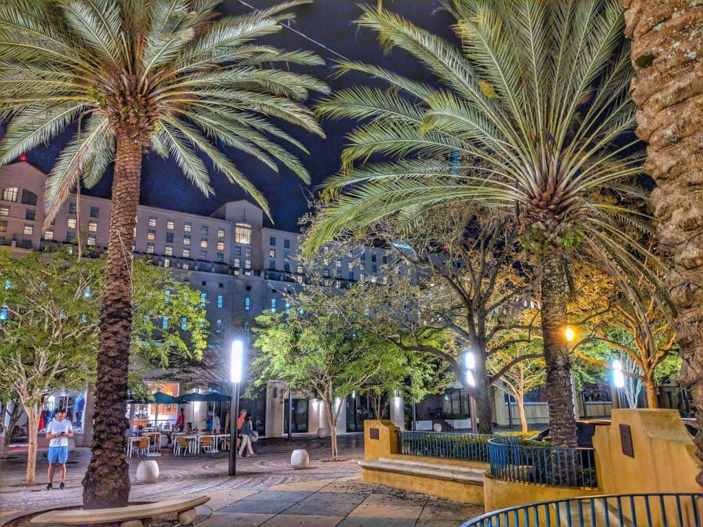 large palm trees in downtown Coral Gables, Florida
