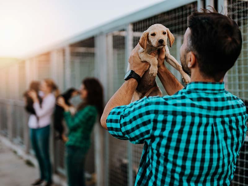 Best Pet Adoption Places in Miami Blog Image