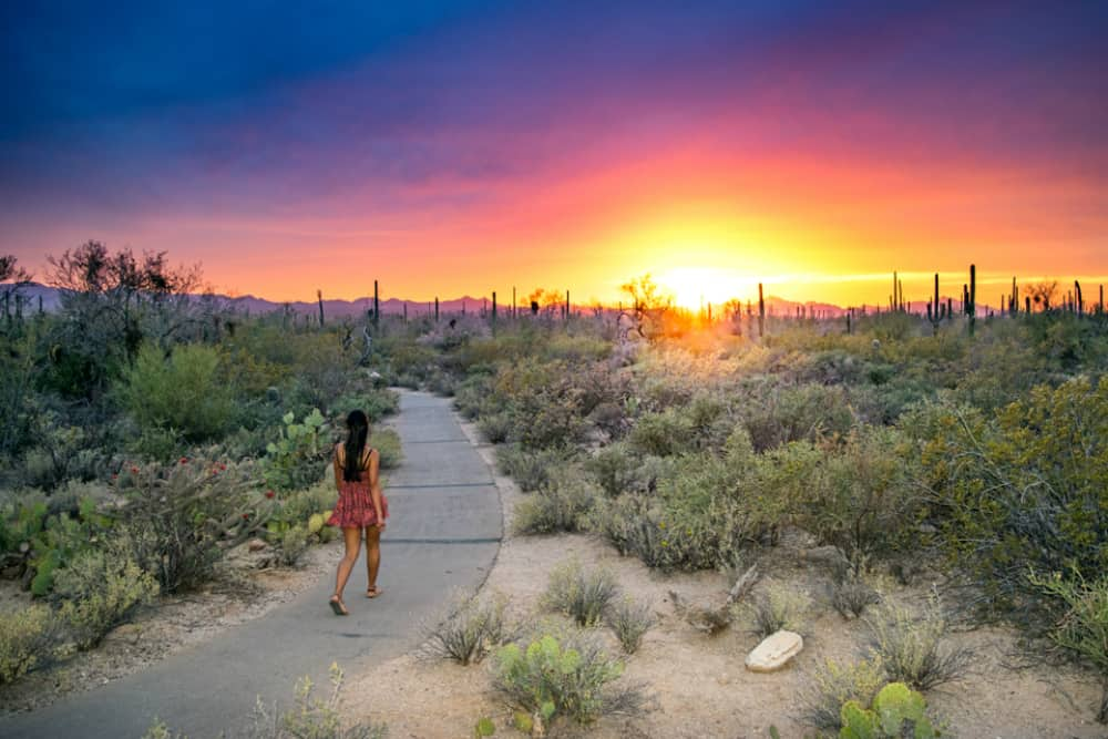Young Woman Walking on Paved Path in Picturesque Desert Wilderness at Sunset - Saguaro National Park, Arizona, USA