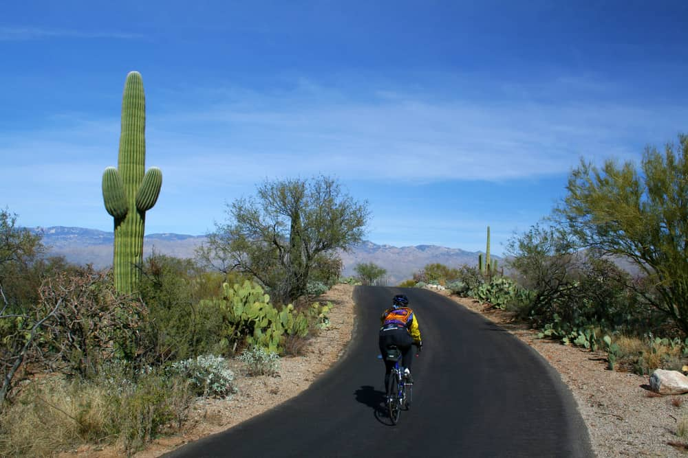 Biker on Cactus Forest Drive, Saguaro National Park, Arizona