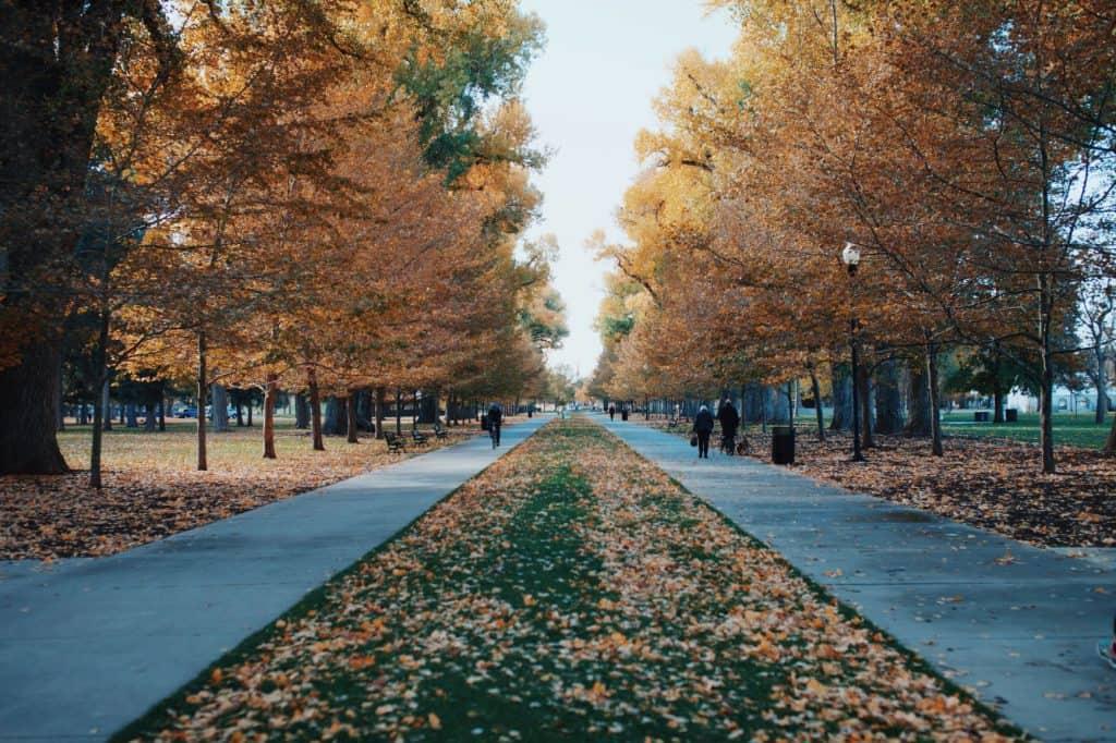 Salt Lake City sidewalk in the fall