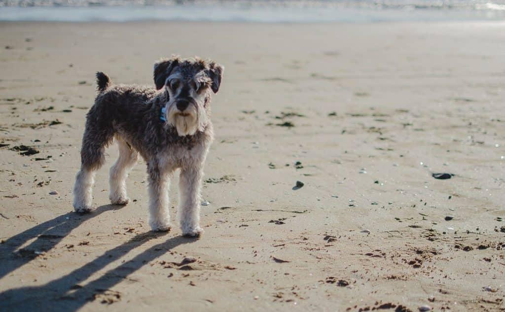 dog standing on beach near ocean