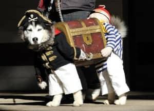 Pirate Dog Treasure Chest_Pet Costumes to put in Storage
