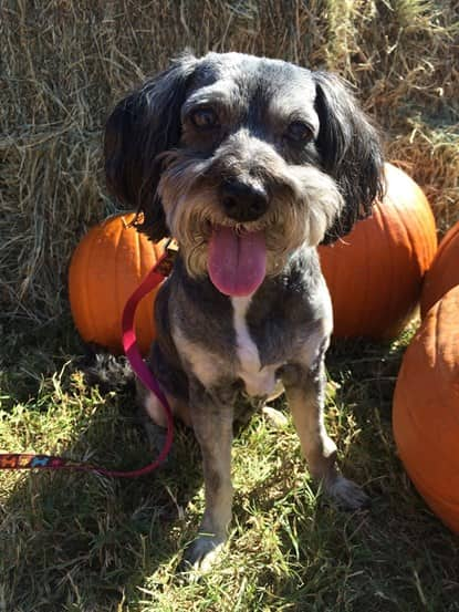 dog at fall festival in Houston, Texas