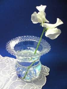 An orchid in a plastic bottle pot