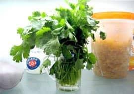 vegetable-storage-fresh-herbs