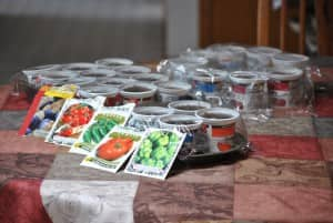 Recycled yogurt containers_seedling pots