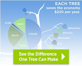 See the difference one tree can make